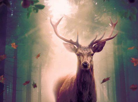 Deer_Hunter_Slider_Image_01